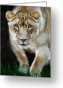 Animals Greeting Cards - Nikita Greeting Card by Big Cat Rescue