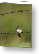 Bared Greeting Cards - No Boundries Greeting Card by Reflective Moments  Photography and Digital Art Images