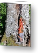 Trees Sculpture Greeting Cards - No Place like Gnome Home II Greeting Card by Eric Knowlton