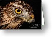 Bird Of Prey Mixed Media Greeting Cards - Nobility Greeting Card by The DigArtisT