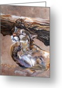 Cougar Greeting Cards - Nonchalant Greeting Card by J W Baker