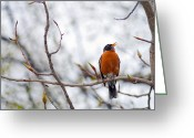 Tree Creature Greeting Cards - North American Robin Greeting Card by Ron Day