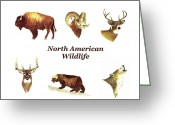 Wolverine Greeting Cards - North American Wildlife Greeting Card by Michael Vigliotti