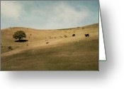 Livestock Greeting Cards - North Canterbury Farmland Greeting Card by Jill Ferry