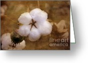 Pods Greeting Cards - North Carolina Cotton Boll Greeting Card by Benanne Stiens