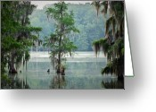 Zen Art Greeting Cards - North Florida Cypress Swamp Greeting Card by Rich Leighton