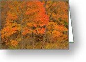 Colors Of Autumn Greeting Cards - Northeast Fall Colors Greeting Card by Stephen  Vecchiotti