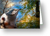 Wildlife Photo Greeting Cards - Northern Mockingbird Autumns Shadows Greeting Card by Bob Orsillo
