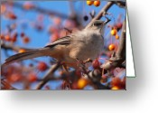 Seasons Greeting Cards - Northern Mockingbird Greeting Card by Bob Orsillo