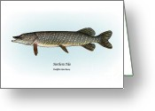 Game Drawings Greeting Cards - Northern Pike Greeting Card by Ralph Martens