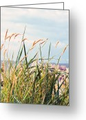 Dune Grass Greeting Cards - Northsea feeling  Greeting Card by Angela Doelling AD DESIGN Photo and PhotoArt