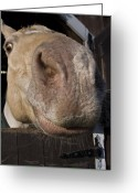 New England Digital Art Greeting Cards - Nosey Greeting Card by Jack Goldberg