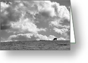 Big Sky Greeting Cards - Not a Cow in the Sky - Black and White Greeting Card by Peter Tellone