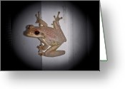 Brown Frog Greeting Cards - Not Enjoying the Spotlight Greeting Card by DigiArt Diaries by Vicky Browning