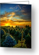 Natural Light Greeting Cards - Not Forgotten Greeting Card by Phil Koch