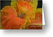 Greet Greeting Cards - Not Happy  Greeting Card by Kathy Gibbons