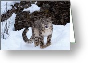 Endangered Species Greeting Cards - Not Too Close -  Please Greeting Card by Sandra Bronstein