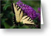 Purple Garden Greeting Cards - Nothing is Perfect Greeting Card by Debbi Granruth