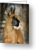 Dog Photographs Greeting Cards - Notredanes Andre Greeting Card by Fran J Scott