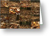 Robert C. Glover Jr Greeting Cards - November Greeting Card by Robert Glover