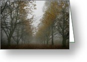 Bare Trees Greeting Cards - November wanderings Greeting Card by Georgia Fowler
