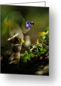 Violet Blue Greeting Cards - Nude with Violet Greeting Card by Rebecca Sherman