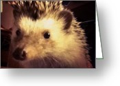Petstagram Greeting Cards - Nuggets Hello #petstagram #hedgehog Greeting Card by Yeidi Morales