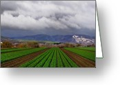 Storm Digital Art Greeting Cards - Nurishment anew Greeting Card by Lynn Andrews