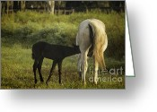 Gaited  Horse Greeting Cards - Nursing Foal and Mare Greeting Card by Lynn Palmer