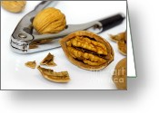 Food And Beverage Greeting Cards - Nut Cracker Greeting Card by Carlos Caetano