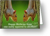 Nutty Greeting Cards - Nutty Birthday Greeting Card by Dave Gigliotti