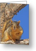 Eat Free Greeting Cards - Nutty Pledge Greeting Card by Jack Norton