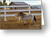 Colorado Creatures Greeting Cards - Nuzzeling Horses Greeting Card by Crystal Garner