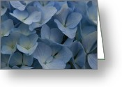 Blue Flowers Greeting Cards - O Sapphire Heaven Soft and Low  Greeting Card by Sharon Mau