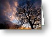 Oak Tree Greeting Cards - Oak against the Sky Greeting Card by Justin Albrecht