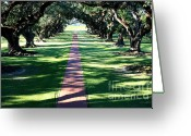 Tree-lined Greeting Cards - Oak Alley Lane Greeting Card by Carol Groenen