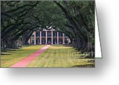 Live Art Greeting Cards - Oak Alley Greeting Card by Perry Webster