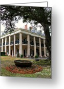 Live Oak Trees Greeting Cards - Oak Alley Plantation Greeting Card by Perry Webster