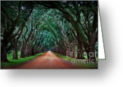 Live Oak Trees Greeting Cards - Oak Alley Road Greeting Card by Perry Webster