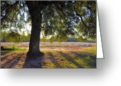 Autumn Scenes Greeting Cards - Oak And Cotton Fields Greeting Card by Jan Amiss Photography