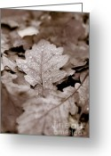 Funeral Greeting Cards - Oak Leaf Greeting Card by Frank Tschakert