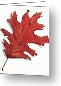 Oak Leaf Drawings Greeting Cards - Oak Leaf In Autumn Greeting Card by Joyce Geleynse