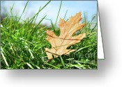 October Greeting Cards - Oak leaf in the grass Greeting Card by Sandra Cunningham