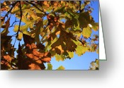 Lyle Hatch Greeting Cards - Oak Leaves with Backlighting Greeting Card by Lyle Hatch