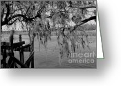 Intercoastal Greeting Cards - Oak on the Water Greeting Card by Melody Jones