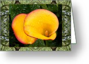 Flower Photos Greeting Cards - Oak Tree Cala Greeting Card by Bell And Todd