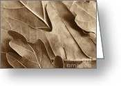 Brown Leaf Greeting Cards - Oak Tree Leaves in Sepia Greeting Card by Jennie Marie Schell