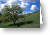 Tree Prints Greeting Cards - Oak Tree with Clouds Greeting Card by Kathy Yates