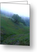 Landscapes Framed Prints Greeting Cards - Oak with Lupine in Fog Greeting Card by Kathy Yates