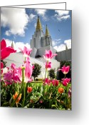 Mormon Temple Photography Greeting Cards - Oakland Pink Tulips Greeting Card by La Rae  Roberts